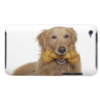 Golden Retriever Dog holding bone in mouth iPod Touch Cover