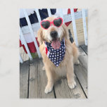 Golden Retriever Dog in Independence Day Glasses Postcard
