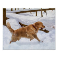 Golden Retriever Dog in the Snow Poster