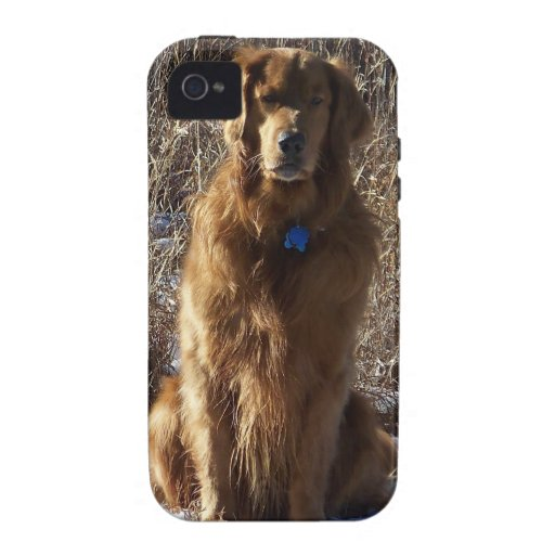 Golden Retriever Dog iPhone 4/4S Cover
