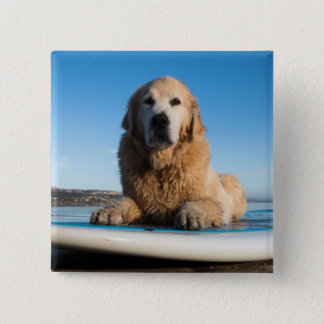 Golden Retriever Dog  Laying On A Paddle Board Button