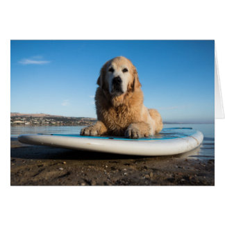 Golden Retriever Dog  Laying On A Paddle Board Card