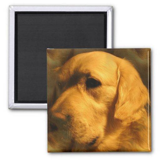 Golden Retriever Dog Magnet Fridge Magnet