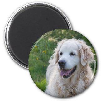 Golden Retriever dog magnet, gift idea