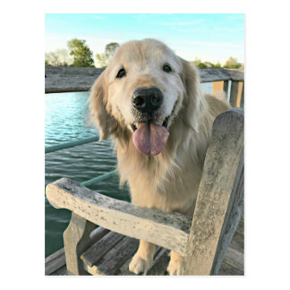 Golden Retriever Dog on a Dock Thinking of You Postcard