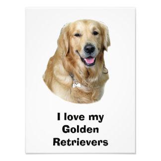 Golden Retriever dog photo portrait