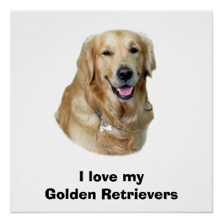 Golden Retriever dog photo portrait Poster
