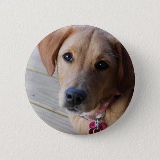 Golden Retriever Dog Pinback Button