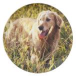 Golden Retriever Dog Plates