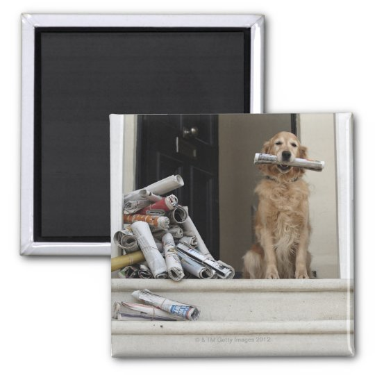 Golden retriever dog sitting at front door magnet