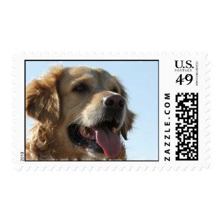 Golden Retriever Dog Stamp