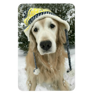 Golden Retriever Dog With Cute Hat in Snow Magnet