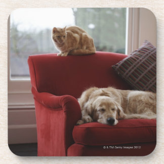 Golden retriever dog with ginger tabby cat beverage coaster