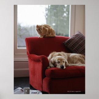 Golden retriever dog with ginger tabby cat poster