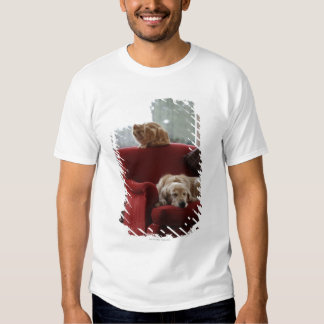 Golden retriever dog with ginger tabby cat tshirts