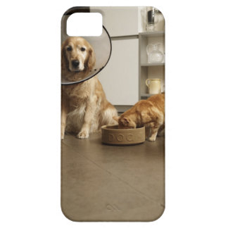 Golden retriever dog with medical collar sitting iPhone SE/5/5s case