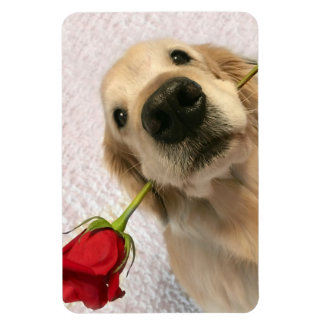 Golden Retriever Dog With Red Rose Magnet