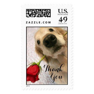 Golden Retriever Dog With Red Rose Thank You Postage