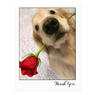 Golden Retriever Dog With Red Rose Thank You Postcard
