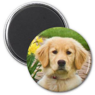 Golden Retriever Dog,  Yellow Daffodils Magnet