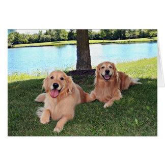 Golden Retriever Dogs in Park Have a Happy Day Card