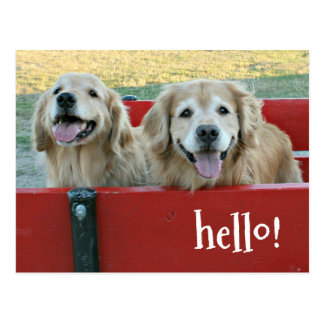Golden Retriever Dogs in Red Wagon Thinking of You Postcard