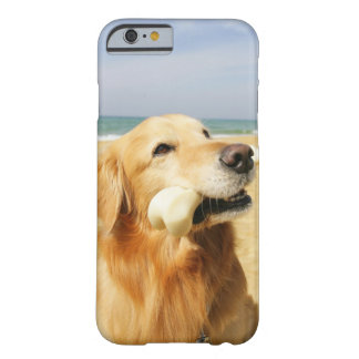 Golden Retriever eating bone Barely There iPhone 6 Case