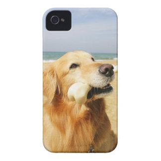 Golden Retriever eating bone iPhone 4 Cover
