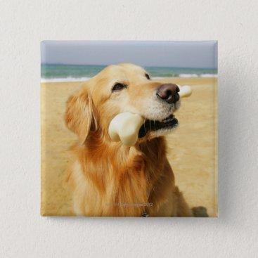 Beach Themed Golden Retriever eating bone Pinback Button