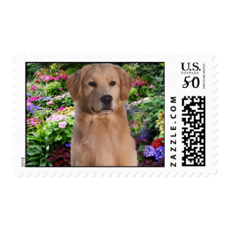 Golden Retriever Emily Postage