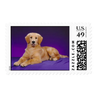 Golden Retriever Emily Rubin Postage Stamp