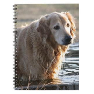 Golden retriever en agua libros de apuntes