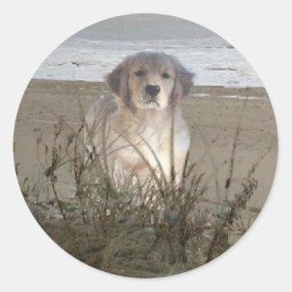 Golden retriever en el pegatina de la playa