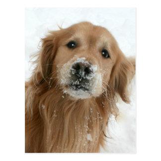 Golden retriever en la nieve tarjeta postal