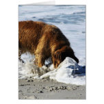 Golden Retriever EVERYBODY STOP! I Lost My Contact Greeting Cards
