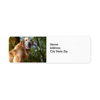 Golden retriever feliz del perro/etiquetas del etiqueta de remitente