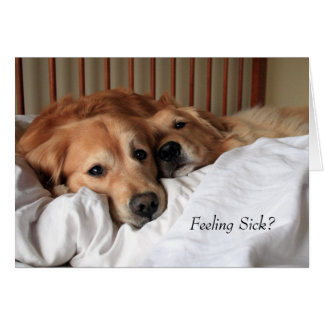 Golden Retriever Get Well Soon Greeting Card