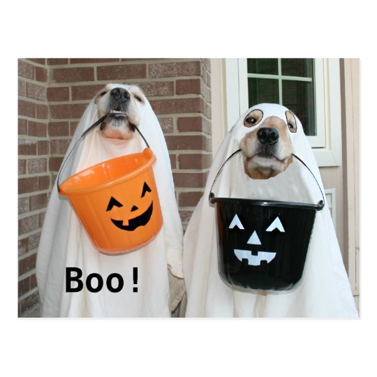 golden retriever halloween ghosts postcard