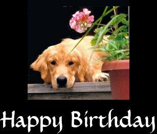 Golden Retriever Happy Birthday Gifts On Zazzle