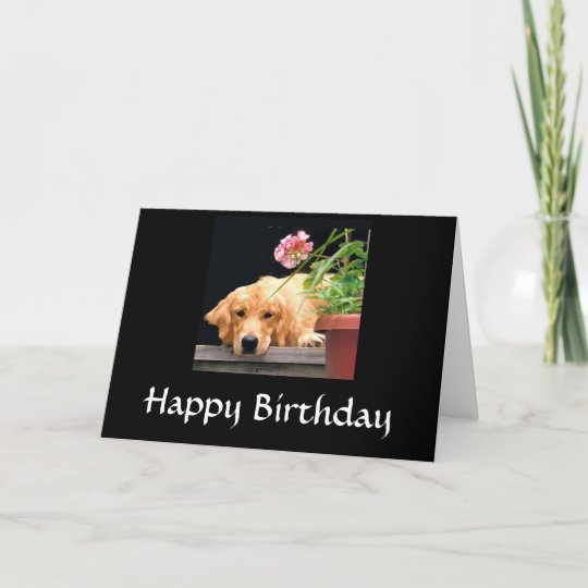 Golden Retriever Happy Birthday Card Zazzle Com