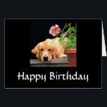 "Golden Retriever Happy Birthday Card<br><div class=""desc"">Golden Retriever Happy Birthday Card</div>"