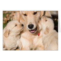 Golden Retriever Happy Mother's Day Card
