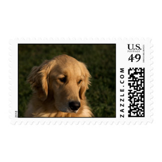 Golden Retriever Head Shot Stamps