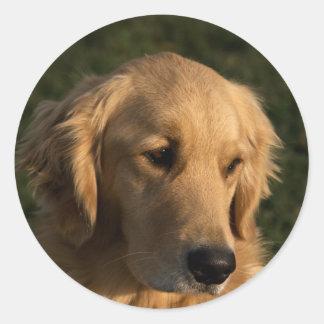 Golden Retriever Head Shot Stickers