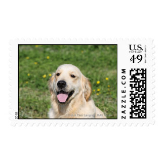 Golden Retriever Headshot 1 Postage