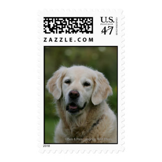 Golden Retriever Headshot 2 Postage