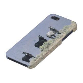 Golden Retriever Headshot 3 iPhone 5  - Customized iPhone SE/5/5s Cover