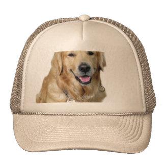 Golden retriever hermoso del perro y su hueso gorros