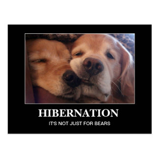 Golden Retriever Hibernation Stay Warm Postcard