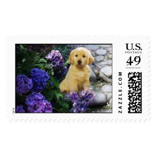 Golden Retriever Hydrangea Postage